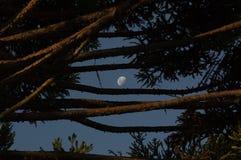 A lua em um céu azul fotografia de stock