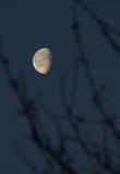 Lua em um céu do fundo Fotografia de Stock Royalty Free