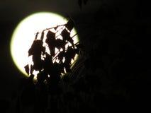 A lua hiden dentro Fotografia de Stock Royalty Free
