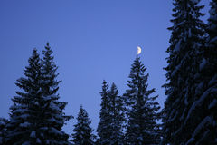 Lua na árvore imagens de stock