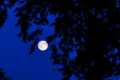 Lua na floresta Fotografia de Stock Royalty Free