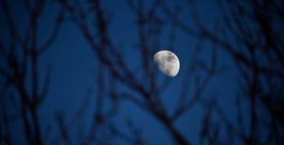 Lua no céu imagem de stock