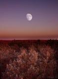 Lua no horizonte Fotografia de Stock