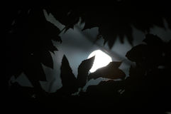 Lua que Shinning através das árvores Foto de Stock Royalty Free