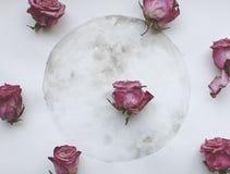 Lua tirada da aquarela e rosas roxas fotografia de stock