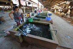 Luang Nam Tha, Laos Royalty Free Stock Photography