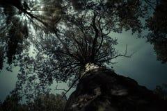 Luar escuro assustador da paisagem da noite da árvore Crepúsculo na floresta, nightscape místico Imagens de Stock Royalty Free