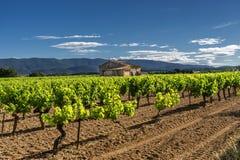 Luberon的葡萄园 免版税库存照片