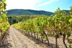 Luberon葡萄园在距离的法国小山 库存图片