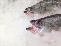 Lubina colocada debajo del hielo en el supermercado Clientes que esperan de la lubina rayada para a comprar para cocinar imagen de archivo
