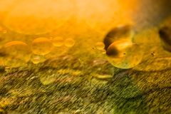 Lubrifique gotas e bolhas em uma superfície do motor da engrenagem do metal Foto do close up Fotografia de Stock Royalty Free