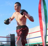 Luca Tassi boxer Royalty Free Stock Image