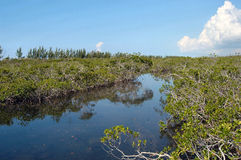 lucayan nationalpark Arkivfoto