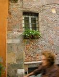 Lucca pradawnych street Toskanii Fotografia Royalty Free