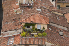 Lucca roof tile of residential house Royalty Free Stock Photography