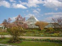 Luccio botanico di Monaco di Baviera Fotografia Stock