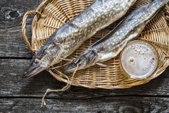Luccio del pesce: secco, secco con un vetro di birra Fotografie Stock Libere da Diritti