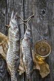 Luccio del pesce: secco, secco con un vetro di birra Immagini Stock