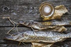 Luccio del pesce: secco, secco con un vetro di birra Fotografie Stock