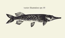luccio Retro illustrazione disegnata a mano di vettore Siluetta del pesce Immagini Stock Libere da Diritti