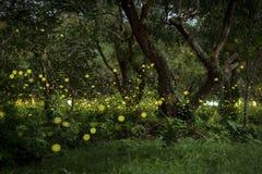 Lucciole che volano nella foresta alla penombra immagini stock libere da diritti
