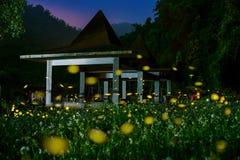 Lucciole nel lato del paese di hsinchu alla notte Fotografia Stock Libera da Diritti