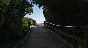 Luce all'estremità del tunnel degli alberi fotografie stock libere da diritti