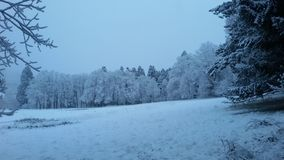 Luce blu del paese delle meraviglie di inverno su neve in prato circondato dagli alberi fotografia stock libera da diritti
