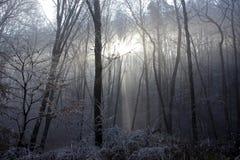 Luce CI di Sun di inverno che viene attraverso il Frosen Forest Trees immagini stock