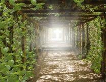 Luce in cielo Modo ad energia curativa di GoCosmic fotografia stock