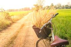 Luce del chiarore del giacimento del riso e della bicicletta Immagine Stock Libera da Diritti