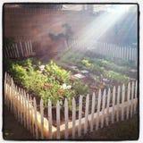 Luce del giardino Immagini Stock