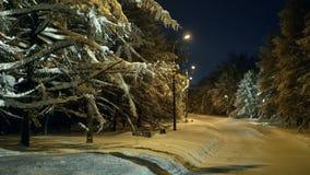 Luce del parco di inverno di sera video d archivio