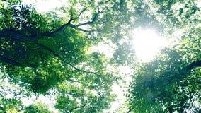 Luce del sole dagli alberi archivi video