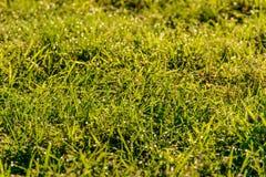 Luce del sole dell'erba di mattina Immagini Stock