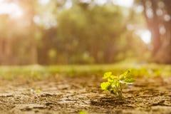 Luce del sole della plantula di mattina Fotografia Stock Libera da Diritti