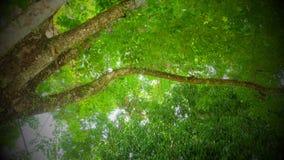 Luce dell'albero fotografia stock libera da diritti