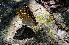 Luce dell'ombra della farfalla della natura Fotografia Stock