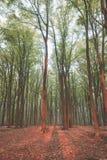 Luce della foresta di alba fotografia stock