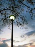 Luce della lampada di mattina e cielo albeggiante nell'ambito del ramo Immagini Stock
