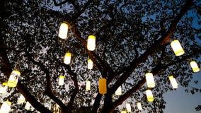 Luce della lanterna di carta che decora sull'albero alla notte Immagini Stock