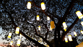 Luce della lanterna di carta che decora sull'albero alla notte Immagini Stock Libere da Diritti