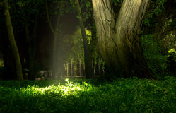 Luce della lanterna in parco con gli alberi e l'erba verde Fotografie Stock Libere da Diritti