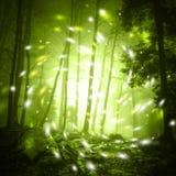 Luce della lucciola di fantasia in foresta nebbiosa Immagini Stock Libere da Diritti