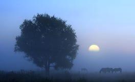 Luce della luna Immagini Stock