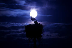 Luce della luna. Fotografia Stock Libera da Diritti