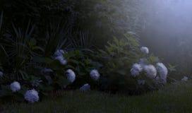 Luce della luna sul giardino immagine stock