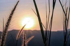 Luce della natura fotografia stock