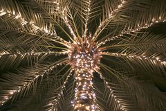 Luce della palma fotografia stock libera da diritti
