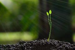 Luce della plantula di mattina sulla natura Immagine Stock